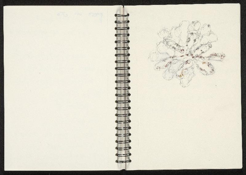 Irene Kopelman, Test Drawings Botrylle Laboratoire de Biologie du Développement de Villefranche-sur-Mer (LBDV), 2020