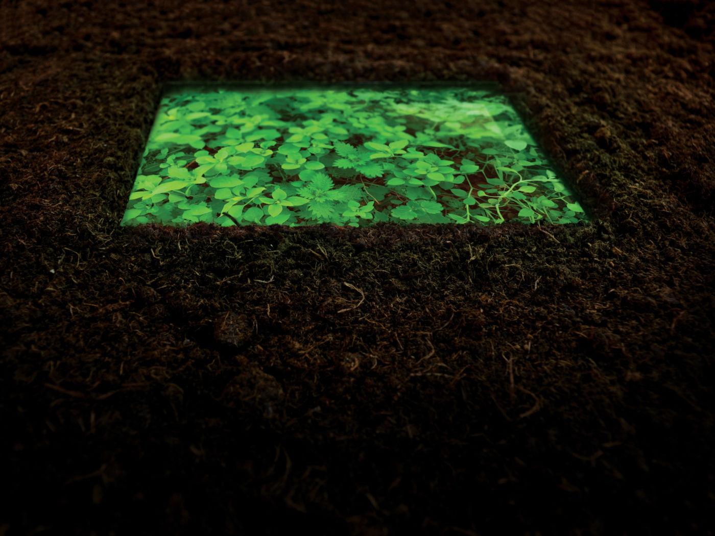Ozan Atalan, Nelipot, 2019, video installation